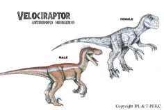 Jurassic Park Raptor, Jurassic Park Poster, Jurassic Park World, Amblin Entertainment, Legendary Pictures, Fantasy Drawings, Falling Kingdoms, Park Art, Dinosaur Art
