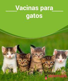 Vacinas para gatos   As #vacinas são essenciais e protegem contra a #raiva, a cinomose, a #rinotraqueíte viral #felina e o calicivirus felino. #Saúde