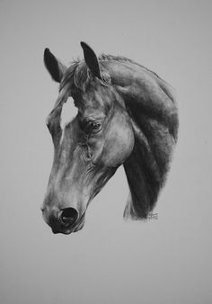 Pencil art, horse drawings, animal drawings, pencil drawings, horse a Horse Face Drawing, Horse Drawings, Realistic Drawings, Animal Drawings, Pencil Art Drawings, Colored Pencil Artwork, Color Pencil Art, Stippling Art, Horse Sketch