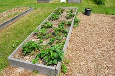 Growing Blueberries on your homesteads is also beneficial for your landscape. Read on and learn how to grow this dual purpose bushes for your homestead. Homesteading Diy Projects, Building A Raised Garden, Self Watering Planter, Backyard Herb Garden, Growing Blueberries, Fruit Garden, Gardening For Beginners, Diy Garden, Homesteading Diy