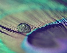 Peacock Feather Photograph - pastel emerald green Nature Bird Water Drop light abstract lilac A Feather 8x10