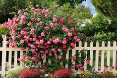 whimsical raindrop cottage... looove the white pvc picket fences (usually 3 feet high) with pink roses planted along the fences along the front and sides of a home!!!! incredible curb appeal!!!!