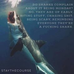 Love it <3 Stay the course! LOL Do sharks complain no! they're up early biting stuff!, chasing shit, being scary! reminding everyone they're a F-ing Shark! Be A SHARK! You are fierce!