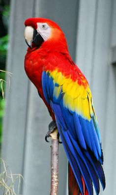 Most recent Pic macaw parrot Style Maintaining ones feathered friend balanced signifies frequently maintaining their own health. Although animal chicken m Cute Birds, Pretty Birds, Beautiful Birds, Animals Beautiful, Tropical Birds, Exotic Birds, Exotic Pets, Colorful Parrots, Colorful Birds