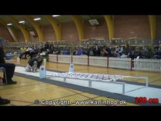 Danish Championships 2010 in Rabbit Hopping -- I want to attend a Scandinavian rabbit jumping show