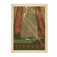 California: Redwood National Park | Bezar