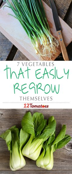 7 Vegetables That Easily Regrow | While this isn't a complete list of all the fruits and vegetables that can regrow themselves, these seven are some of the easiest to start!