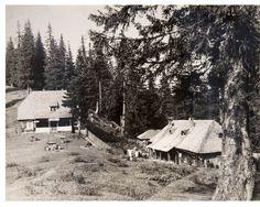 Refacem împreună Cabana Urlea din Munții Făgăraș. Montana, Eco Friendly, Outdoor, Cabin, Outdoors, Flathead Lake Montana, Outdoor Games, The Great Outdoors