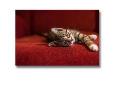 Bezeichnung: 1 Foto auf Leinwand  Marke: fotografiert und gestaltet von elbvue Material: Leinwand auf Holzrahmen  Größe: 30 x 20 x 2cm  Motiv: Katze IV Zustand: unbenutzte Neuware  Bekannt...