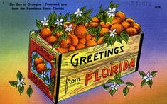 Old Florida: Debbie will love this! I'm a fourth generation Floridian of a certain age that lived in the Sunshine State before the mouse arrived. When I was a young girl my parents. Vintage Florida, Old Florida, Florida Girl, Florida Usa, Florida Travel, Florida Keys, Florida Beaches, Posters Vintage, Vintage Postcards