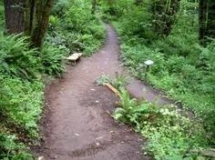 Forest Park is a 5,100 acre city owned wilderness that is one of the largest city parks in the country. The park has more than 80 miles of hiking trails lined with huge Oregon pines, 100 different species of birds and a large variety of Oregon wildlife.