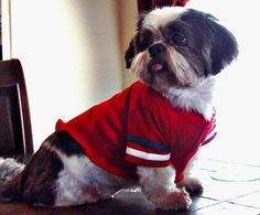 No Sew How to make a t-shirt for your dog Fast and easy
