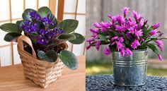A legellenállóbb szobanövények, amelyeket alig kell gondozni, mégis csodaszépek! Ale, Gardening, Diy Ideas, Plant, Cactus, Alcohol, Ale Beer, Lawn And Garden, Craft Ideas