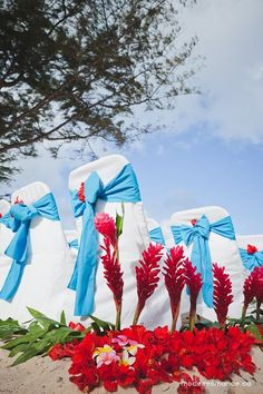 hawaiian chair covers shower with arms cvs 86 best images sashes wedding ideas vibrant aisle decor at this destination on waimanalo beach hawaii photo by http