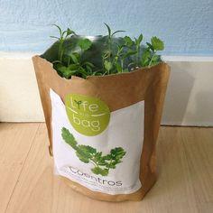 Grow bag coentros Life in a bag by Leonor Poeiras