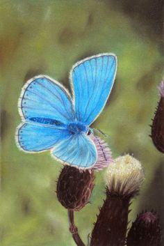 Quadro di una farfalla - realismo - illustrazione naturalistica - iperrealismo by ArtForeshortening #italiasmartteam #etsy