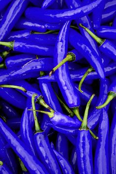 Blue Hot Peppers - wouldn't these be pretty in the garden!