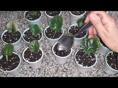 Diy Room Decor, Home Decor, Farmer, The Good Place, Succulents, Youtube, Little Gardens, Garden, Herb Garden