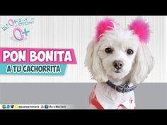 Pon bonita A TU CACHORRITA! ★Así o más fácil★ DIY - YouTube