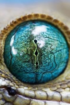 Cool reptile eye