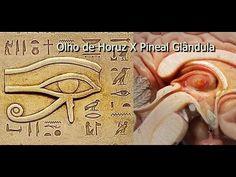 Glândula Pineal...! o que você não sabia...! - YouTube