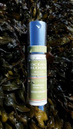 Ocean Bloom's Seaweed Moisturiser is a beautiful, light moisturiser made from organic oils for a youthful appearance. Plant Stem, Organic Oil, Moisturiser, Stem Cells, Seaweed, Glass Jars, Sunscreen, Whiskey Bottle, Irish