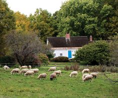 """Our sheep farm is Leyden Glen Farm."""