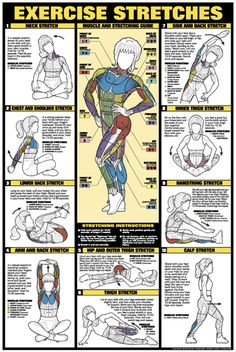 Exercise Stretches Poster - Laminated