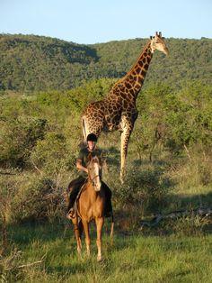 A la rencontre des géants d'Afrique, randonnée à cheval en Afrique du Sud