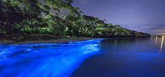 Descubre la belleza de las playas bioluminiscentes en México. Dónde ir te dice…