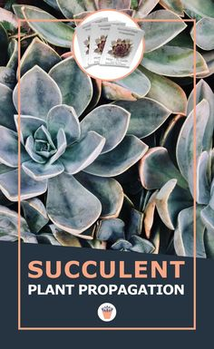 The wonderful thing about succulents is how forgiving they are, and how willing to thrive in spite of doing everything wrong - but now you won't have to make those mistakes. Here's a few of the tips that you'll find in this e-book. #succulenttips #succulentseeds #propagation Propagating Succulents, Planting Succulents, Garden Plants, Succulent Seeds, Xeriscaping, Drought Tolerant Plants, Propagation, Wonderful Things, Garden Projects