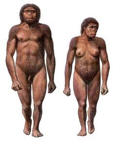Homo habilis reconstruction by Mauricio Antón