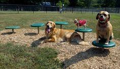 Stepping Paws | Dog Park | Dog Exercise Equipment at BYO Recreation. https://www.byoplayground.com/dog-park