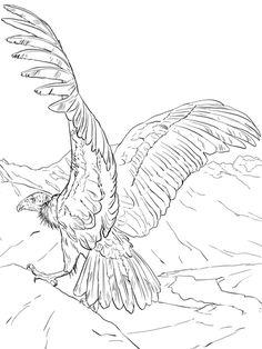 Cóndor andino Dibujo para colorear