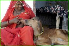 Women breastfeeding animals