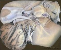 """""""Puppy Puzzle"""" by Chris A. Whippet Puppies, Dogs And Puppies, Skinny Dog, Greyhound Art, Italian Greyhound, Dog Day Afternoon, Puppy Dog Eyes, The Perfect Dog, Working Dogs"""