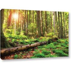 ArtWall Dragos Dumitrascu Back to Green Gallery-Wrapped Canvas, Size: 12 x 18, Brown