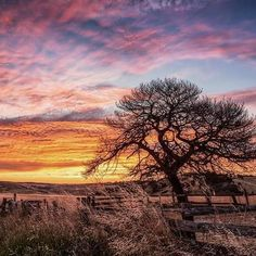 """Dec 28 2016 I could see there was going to be a sunset brewing up. The clouds looked awesome so I said to my hubby and son David, """"Hey. Lets go capture the sunset"""". We only went a couple of kms down the road to a spot where we could see the sun go down over a skeleton tree by some stock yards. Sure enough the skies turned on their charm. And the skies looked amazing both towards the setting sun and behind us! Mind you...Gill Lucky Fry....it was my birthday :) Here is the one looking at the…"""