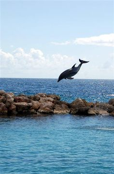 """Dolphin Academy in Curacao: to investigate. """"one of those exceptionally good dolphinariums. They train the dolphins to swim in the open ocean next to their boat, and they always follow the boat back to the aquarium."""""""