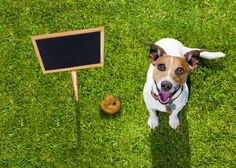 Artificial Grass for Pets, Fake & Synthetic Grass for Dogs, Artificial Turf for Dogs - Smart Grass USA Fake Grass For Dogs, Artificial Grass For Dogs, Artificial Turf, Cute Puppies, Cute Dogs, Indoor Arena, Funny Animals, Pets, Outdoor
