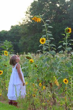 https://flic.kr/p/YWUBQ   sunflowers 032