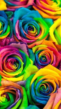 C Close Up Of Rainbow Rose Heart Art Print Home Decor Wall Art Poster
