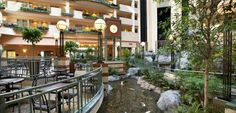 Embassy Suites Raleigh - Durham/Research Triangle Hotel, NC - Pond with Fish in Atrium