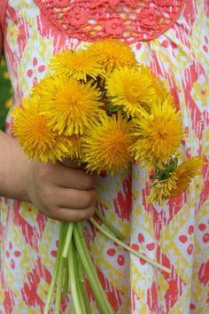 Dandelion bouquet !