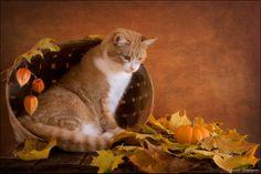 Autumn by Eleonora Grigorjeva on 500px