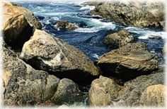 San Diego's best tide pools, with link to tide charts