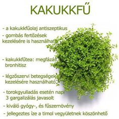 Életmód cikkek : Zöldség és gyümölcsök hatásai Herbal Remedies, Health Remedies, Natural Remedies, Health And Beauty Tips, Kraut, Vegan Recipes Easy, Natural Healing, Healthy Tips, Herbalism