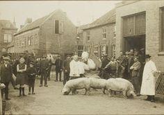 """Varkenskeuring. In de 17e eeuw kende Helmond strikte regels voor de plaatsen van kramen op de markt. In de zogenaamde """"keuren"""" stond precies waar de potten- en pannenverkopers, de broodverkopers, de mensen met graan, turf en beesten moesten staan. De hele Markt en de Kerkstraat stonden vol. Maar ook nog buiten de Bindersepoort, bij het huidige postkantoor, stonden beesten. Klik op de afbeelding!"""