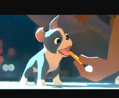 Meet the newest Disney star! Winston, the hungry Boston terrier puppy, from 'Feast'