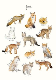 A chart featuring the Blanford's fox, Red fox, Fennec fox, Arctic fox. Animal Drawings, Art Drawings, Animal Art Prints, Animal Illustrations, Art Fox, Fuchs Baby, Animals Tattoo, Animals And Pets, Cute Animals
